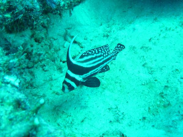 Diving November 27, 2010